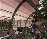 मंगल और चंद्रमा पर भविष्य में फसल उगाना होगा संभव, टमाटर-मूली समेत 10 सब्जियां उगाईं