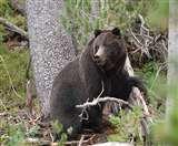 घास काटने गई महिला पर भालू का हमला, अन्य महिलाओं ने शोर न किया होता तो चली जाती जान