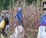 कर्नाटक: बेमौसम बारिश बन रही है कहर, किसानों की फसलें हुई बर्बाद