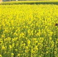 बूंदाबादी के साथ बढ़ी गलन , फसलों ने बढ़ाई चिता
