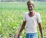 लाखों किसानों की होने वाली है बल्ले- बल्ले, जायद फसलों से होगी जबरदस्त कमाई