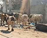 तीसरी आंख: पुलिस ने हर विभाग का उठाया बीड़ा, गोशाला के लिए सीपी ने किया एक करोड़ का इंतजाम