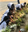 दून इंटरनेशनल ने दिया पर्यावरण बचाने का संदेश