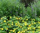 जिम कार्बेट पार्क में वन्यजीवों के लिए परेशानी का शबब बने लैंटाना को जड़ से खत्म किया जाएगा