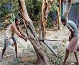 अब आनलाइन लेनी होगी पेड़ों को काटने की अनुमति, पेड़ों की कटाई से पर्यावरण हो रहा प्रभावित