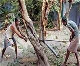 हरे पेड़ों के 'कत्ल' पर DM ने DFO से रिपोर्ट की तलब Lucknow News