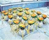 Rajasthan: रॉयल लुक देती है मेवाड़ की अनूठी ठीकरी कला