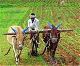 देशभर में बनेंगे 10 हजार किसान उत्पादक संगठन, योजना पर कुल साढ़े चार हजार करोड़ रुपये का प्रावधान
