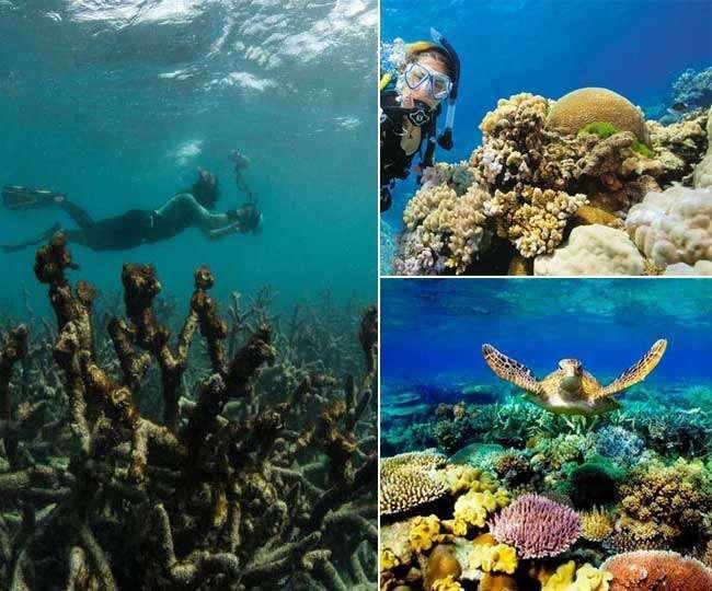 रीफ कैल्शियम कार्बोनेट से से अपना विस्तार करते हैं। यह कैल्शियम कार्बोनेट प्रवाल जीवों द्वारा छोड़े जाते हैं।