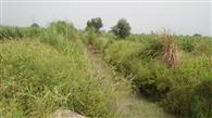 रजवाहे की सफाई न होने से किसान लामबंद