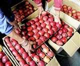 कश्मीर में पंजाब के फल कारोबारी पर आतंकी हमले से आढ़ती डरे, बोले- अब कारोबार मुश्किल Jalandhar News