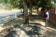 ग्रीन बेल्ट में लगी आग, पेड़ों को हो रहा नुकसान