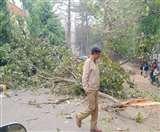 सैक्रेड हार्ट कन्वेंट स्कूल जाने वाली सड़क पर गिरा पेड़, बाल-बाल बचे नौनिहाल Jamshedpur News