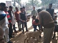भेड़ व बकरियों में निमोनिया का टीकाकरण शुरू