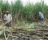 किसानों को बर्बाद कर रही केंद्र सरकार Amroha News