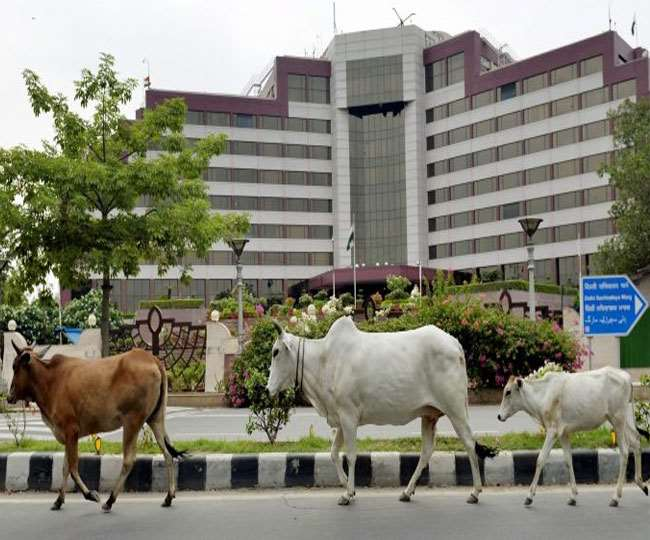 सड़कों पर घूमते बेसहारा पशु न केवल हादसों का कारण बनते हैं, बल्कि उनसे देश की छवि खराब होती है।