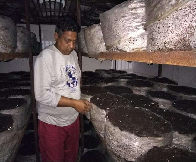 गुरदीपक मशरूम की खेती करते हैं। 15 हजार रुपये में कारोबार शुरू किया था। (फोटो जागरण)