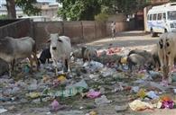 दीपावली का त्योहार नजदीक, शहर में कूड़े के भरमार