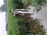 मगई नदी का प्रवाह रोकने से रबी की खेती पर संकट