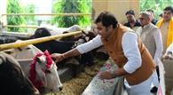 गोविद गोधाम गोशाला में ऊर्जा मंत्री ने किया गोपूजन