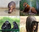 38 साल का हो चुका था हुक्कू बंदर, ये हैं लखनऊ जू के Elderly Animals