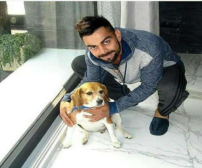 टीम इंडिया के कप्तान विराट कोहली को PETA ने 'पर्सन ऑफ द ईयर' चुना