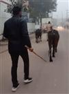 अवैध पशु कटान का फिर राजफाश, तीन पकड़े