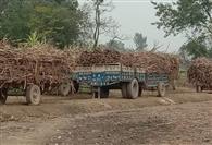 गन्ना किसानों पर भारी पड़ रही मिल अधिकारियों हठर्धिमता