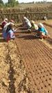 वन विभाग की नर्सरी में जैविक खाद से तैयार हो रहे एक लाख पौधे