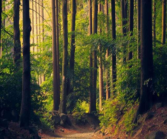 धरती पर फैले जंगलों और वन क्षेत्र को बचाना होगा