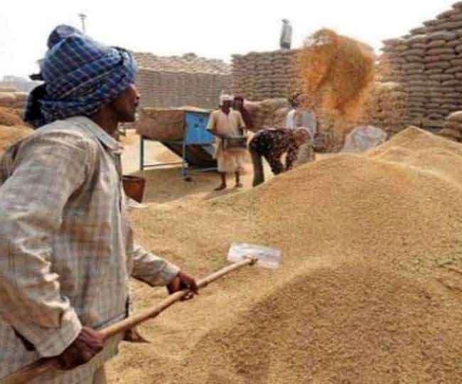 हरियाणा में रबी की फसलों की खरीद 1 अप्रैल से। फाइल फोटो