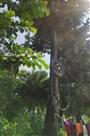 नहीं बदला जा रहा पेड़ से बंधा बिजली का टूटा तार , खतरे की आशंका