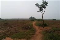 वन भूमि पर कब्जे का खेल, नारा हुआ फेल