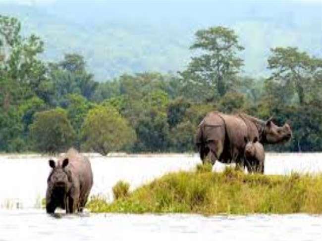 असम का काजीरंगा पार्क पर्यटकों के लिए फिर से खुला।
