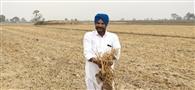 जमीन बेचने वाले व मरे किसान कैसे जला सकते पराली, दर्ज मामले उठा रहे सवाल