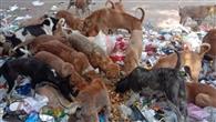 इस्पात नगरी में लावारिस कुत्तों पर लगाम नहीं