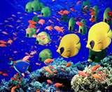 100 से अधिक प्रजातियों के लिए ध्वनि प्रदूषण बना काल, मानसिक और शारीरिक रूप से बना रहा बीमार