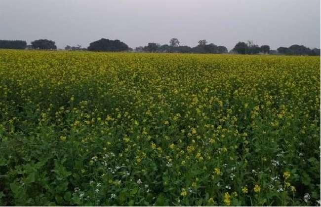 इलेक्ट्रॉनिक कृषि बाजार पर है विश्वास का संकट, बड़े किसानों तक रह जाती है सारी सहायता: कृषि मंत्री
