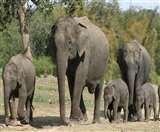 सद्दाम को HC से झटका, कहा- जंगल ही है हाथी का आवास, कभी-कभार कर सकता है मुलाकात