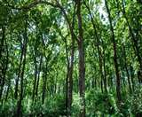 भारतीय वन सर्वेक्षण की हालिया रिपोर्ट में उत्तराखंड को लेकर राहत और चिंता दोनों ही शामिल