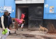 हैलट में मरीजों संग घूमते हैं सूअर व कुत्ते