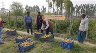 कृषि वैज्ञानिकों ने बागवानी का किया निरीक्षण