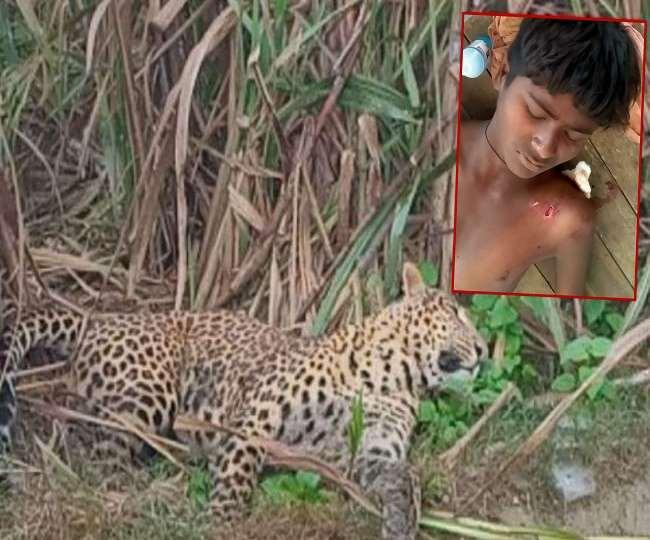 Leopard attack in Bahraich:घायल किशोर को पीएचसी नेवादा में भर्ती कराया गया।