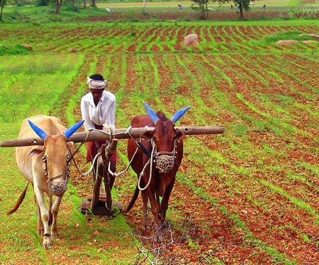 स्वरोजगार के अवसर पैदा करने के लिए छोटे किसानों को कुटीर उद्योग स्थापित करने के लिए प्रोत्साहित किया जा रहा।