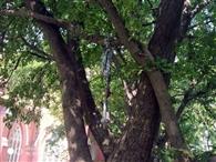 आत्महत्या या हत्या! पहले गर्दन काटी, फिर नस, पेड़ पर कपड़ा लटका मिला