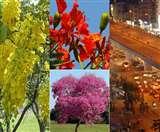 बड़ी पहल: बिहार में ऐसे होंगे फूलों के शहर, खुशबू पर रखे जाएंगे चौक-मोहल्लों के नाम