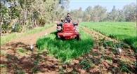 राजस्व विभाग ने ग्राम समाज की 160 बीघा भूमि करायी कब्जा मुक्त