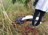 युवक की गला रेतकर हत्या, सड़क के किनारे मिला शव Gorakhpur News