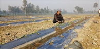 किसानों की आय दोगुनी कर रहा ताइवान का तरबूज