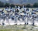 प्रवासी पक्षियों को और लुभाएंगे गंगा के मैदान, व्यवस्थित किए जाएंगे उत्तर प्रदेश के वेटलैंड